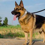 امور منزل و مراقبت از سگ در پونک